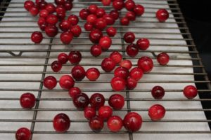 Frosted Cranberries are a super simple and fun addition to your holiday table! Serve as a snack, or use as a beautiful garnish! | desserts | Thanksgiving recipes | holiday recipes | #CranberryWeek | BearandBugEats.com